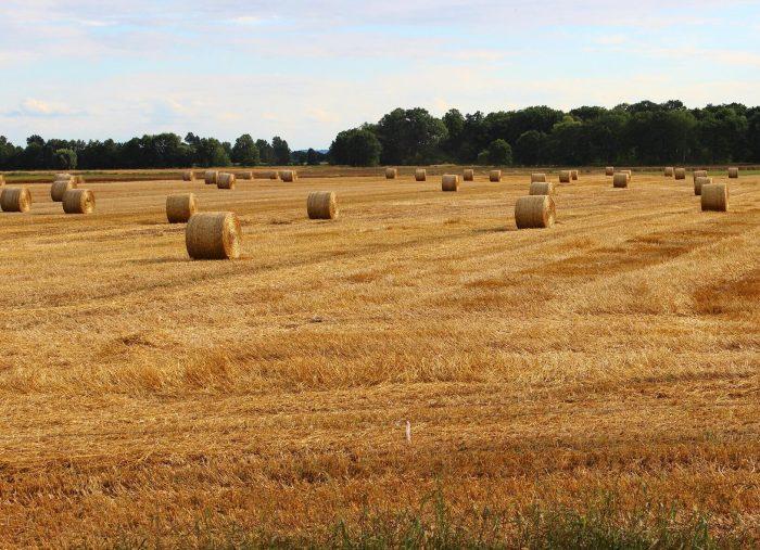 L'inadempimento nei contratti agrari