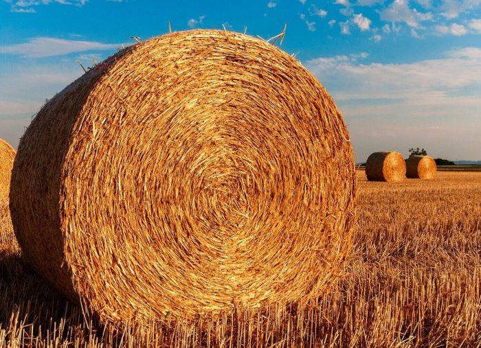 Prelazione agraria e riscatto: modalità della denuntiatio e termini di esercizio