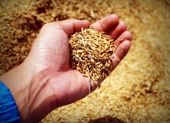 Prelazione e riscatto agrario in caso di pluralità di affittuari