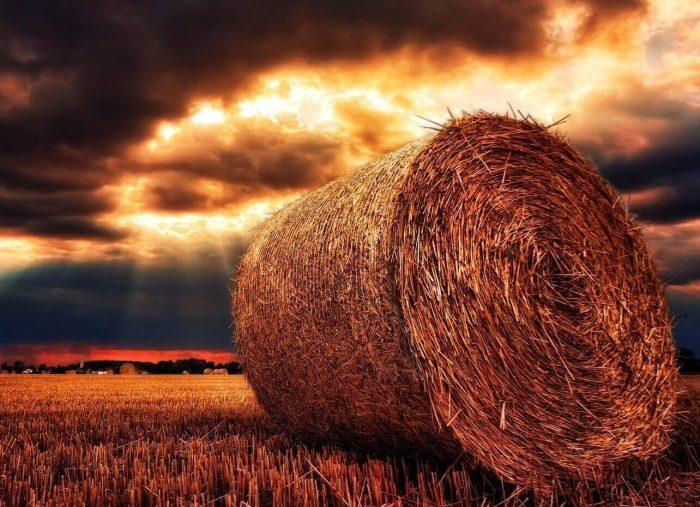Diritto Agrario