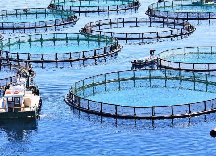 L'acquacoltura, impresa agricola o impresa ittica?